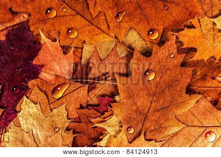 Colorful autumn leaves with drops background