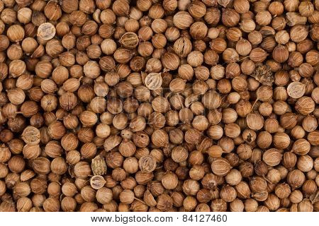 Close Up Of Dried Coriander Seeds