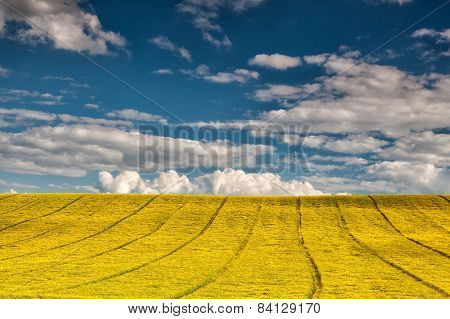 On The Empty Rape Field