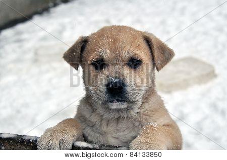 Puppy on snow