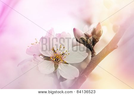 Soft focus on blooming tree