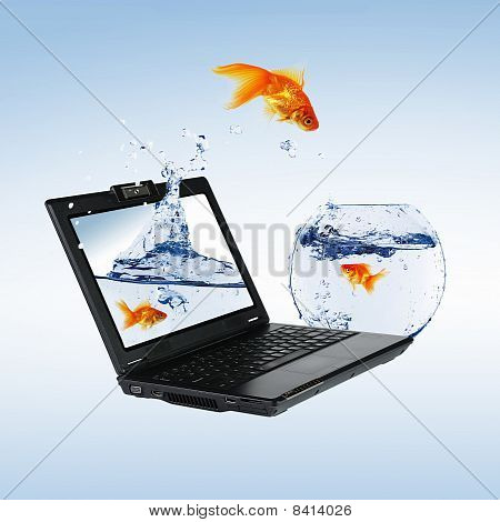 Goldfish And Laptop