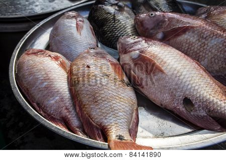 Fish Red Snapper Market Stall Concept