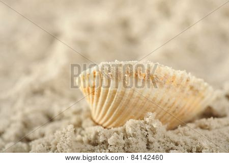 Cockleshells And Sand