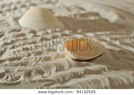 Cockleshells On Sand