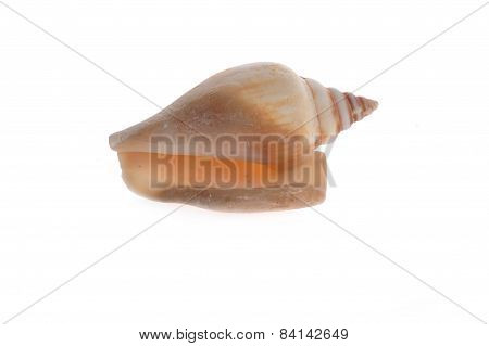 Sea Shell Close Up