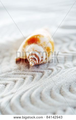 Cockleshell On Sea Sand