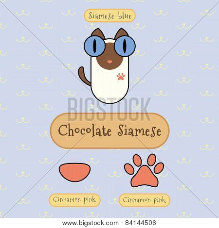 Chocolate Siamese Cat.