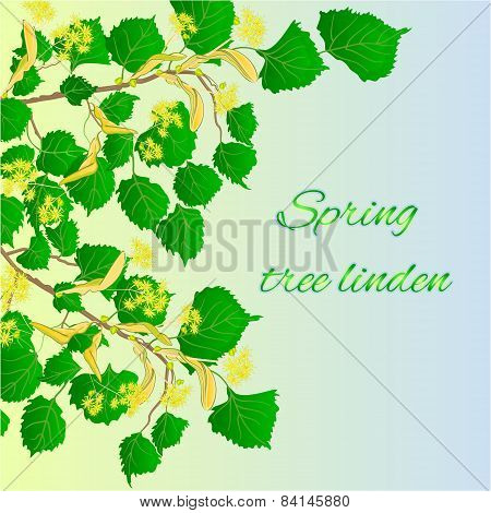Spring Tree Linden Vector
