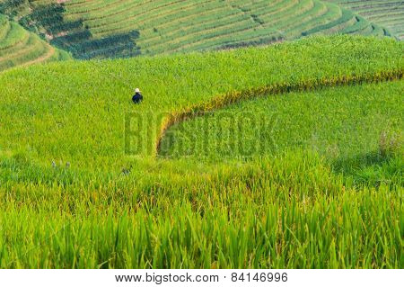 Farmer on Dragon's Backbone Rice Terraces