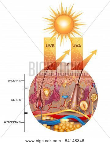 Protected Skin With Sunscreen Lotion, Uvb And Uva Rays Can Not Penetrate