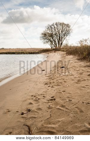 Sandy River Beach And A Bare Tree