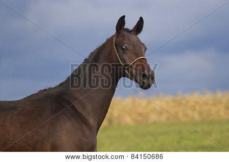 Stallion outdoor