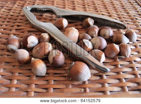Nutcracker and dry ripe brown hazelnuts.