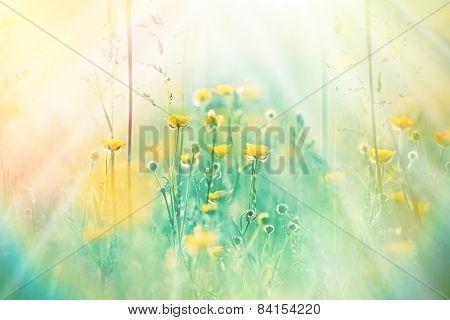 Wild flower - Yellow flowers