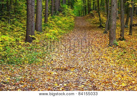 Autumn Green-yellow-red Forest