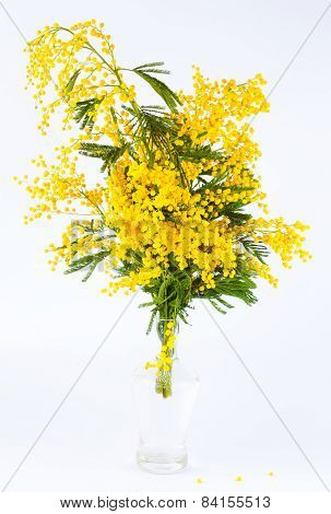 Bouquet of a yellow mimosa
