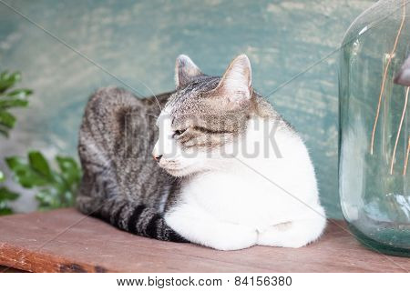 Siamese Cat Lying On Wooden Table