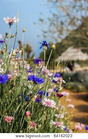 Flower Garden Monjam