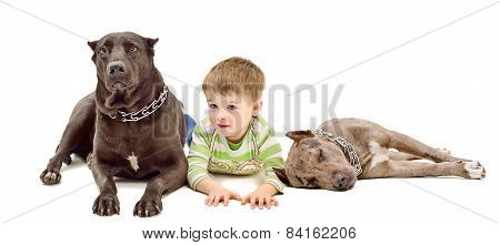 Cute boy and two dogs  lying down together