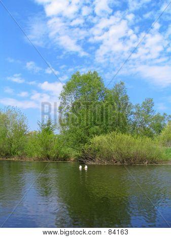 Navegación síncrona de patos
