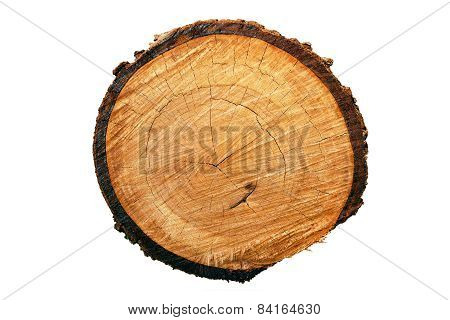 Tree annual ring (Die cutting)