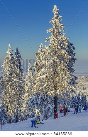 Skiers On Ski Runs, Poiana Brasov, Romania