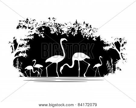 Animal of wildlife (flamingo)