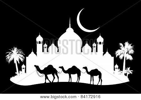 animal of wildlife (camel)