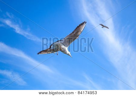 Seagull On Blue Sky Background With Windy Clouds