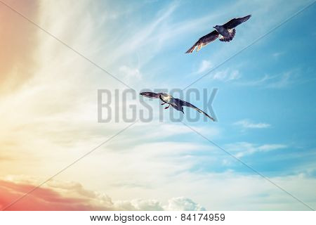 Seagulls Flying Oncolorful  Cloudy Sky Background