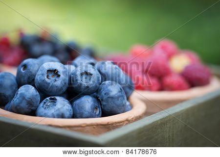 Fresh Berries In Garden