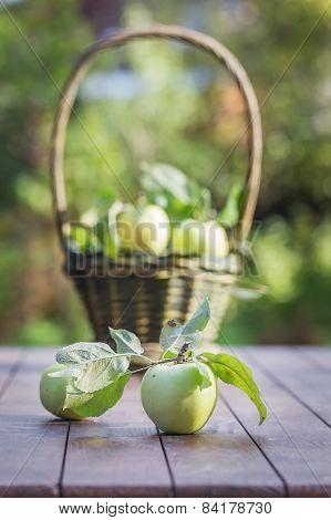 Fresh Apple Crop Outdoors