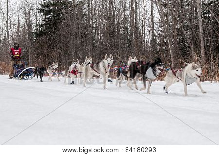 Beargrease 2015 Mid Distance Saeward Schillai On Trail