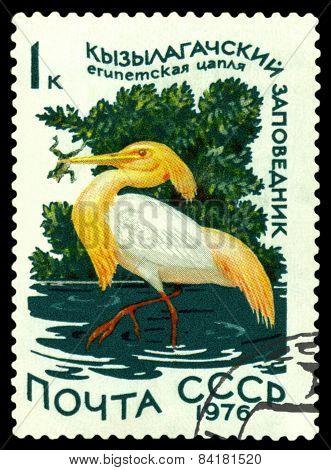 Vintage  Postage Stamp. Squaqqo Heron.