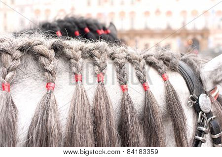Gray Horse Neck With Plaited Mane. Outdoors.