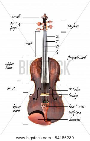 Parts of a violin, viola or fiddle with description