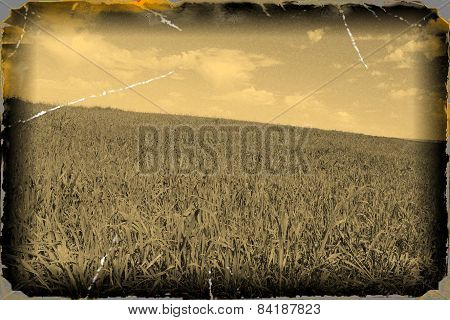 Old Grunge Photo With Field Of  Grass On Sky Background