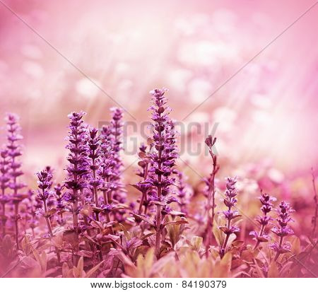 Beautiful purple meadow flower