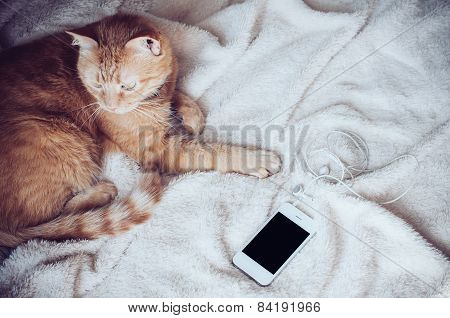 cat and smartphone