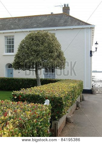 House With Tree And Hedges