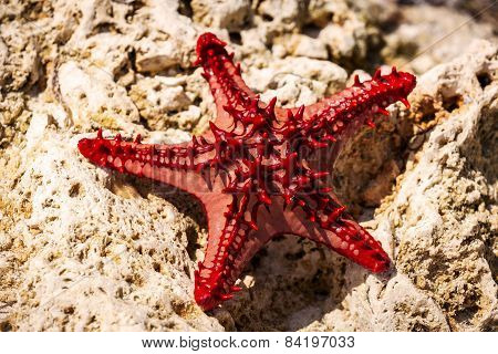 Ocean, starfish, stone, sea animals, sand, sun, Kenya, Mombasa, vacation, travel,