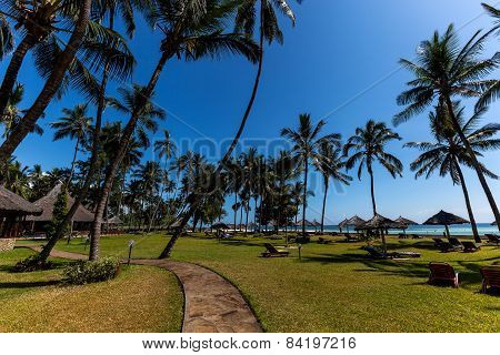 vacation, palm trees, ocean, hotel, holiday,