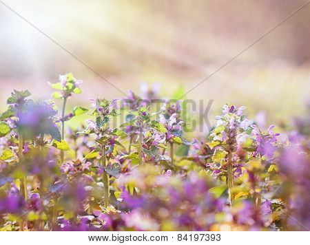 Beautiful purple flower in meadow