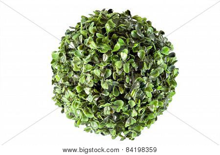Fake Plant Cirlce