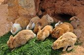 image of rabbit hole  - Rabbits feeding on grass and rabbit hole - JPG