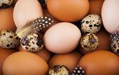 stock photo of quail egg  - Chicken eggs and quail eggs with feathers  - JPG