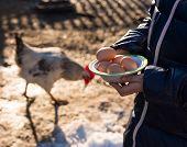 stock photo of poultry  - Pretty girl holding fresh organic eggs - JPG