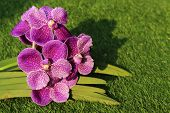 stock photo of orquidea  - Beautyful Orchid in the city on morning - JPG