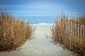 pic of atlantic ocean beach  - Path to the wide sandy beaches of the Atlantic - JPG